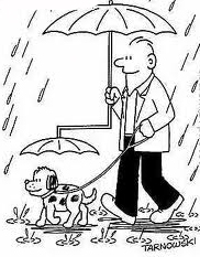 dog walking in rain